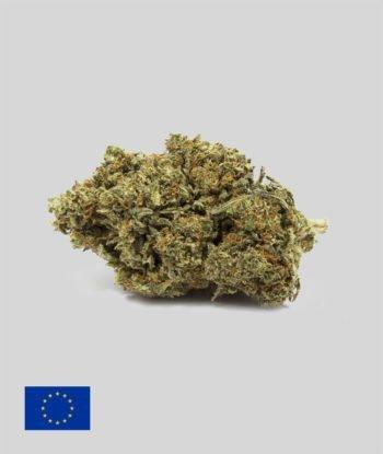 GREEN GELATO 1GR CBD < 30%