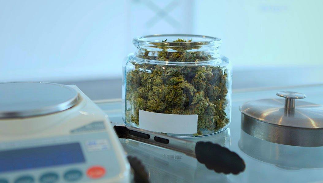 Cannabis terapeutica il farmaco sarà gratuito in Sicilia