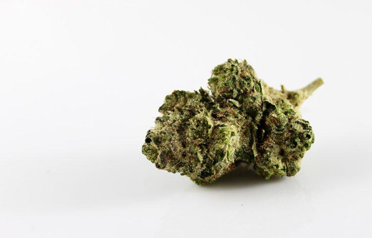 Cannabis in Italia, le 3 cose da sapere per essere davvero informati