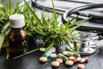 Il 2020 ha fatto segnare il record di studi scientifici sulla cannabis