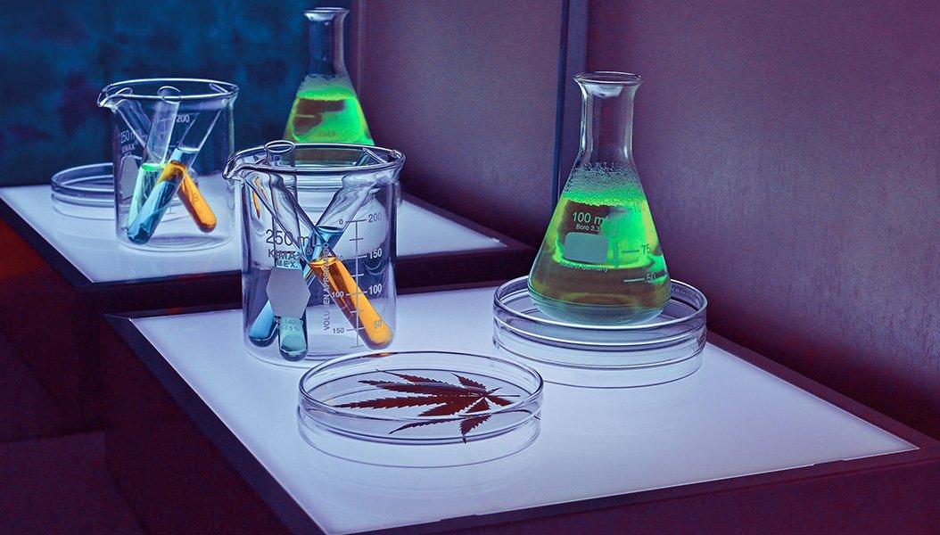 Nuova classe di cannabinoidi scoperta da ricercatori italiani il THCH e il CBDH