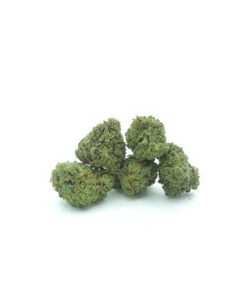 Popcorn bud Gelato cannabis light by flowerfarm
