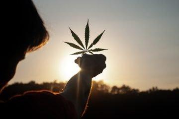 sardine-cannabis-legalizzazione