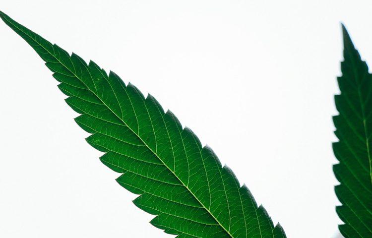 Stop all'emicrania con la cannabis i nuovi studi
